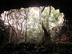 Living The New Australian Dream - Undara Lava Tube7